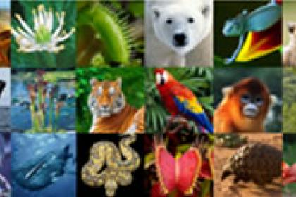 UNCTAD brings new technology to wildlife trade management